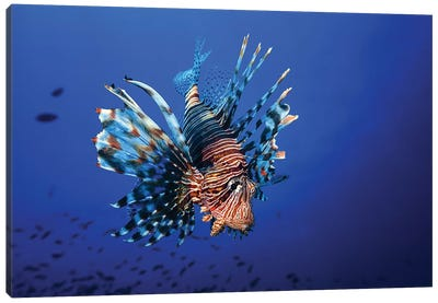 Lionfish Canvas Art Print