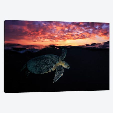 Sunset Turtle Canvas Print #OXM3329} by Barathieu Gabriel Canvas Wall Art