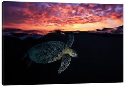 Sunset Turtle Canvas Art Print