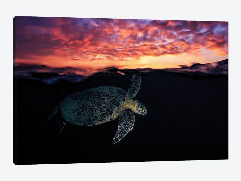 Sunset Turtle by Barathieu Gabriel 1-piece Canvas Artwork