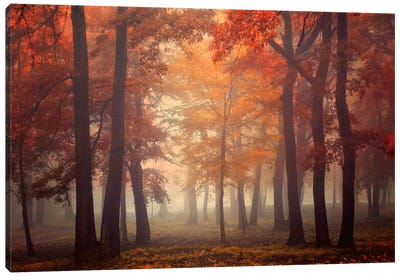 Feel by Ildiko Neer Canvas Artwork