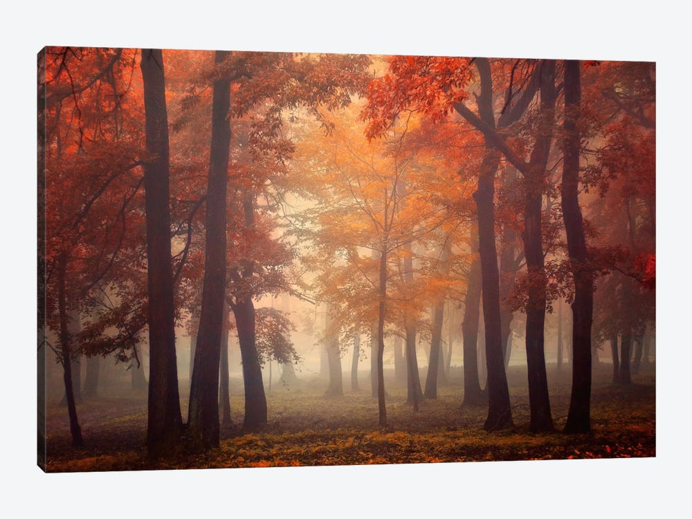 Feel by Ildiko Neer 1-piece Canvas Artwork