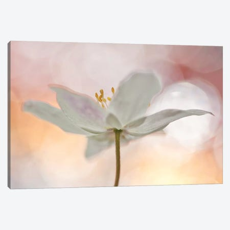 A Sip Of Art Canvas Print #OXM3333} by Bee Thalin Canvas Art Print