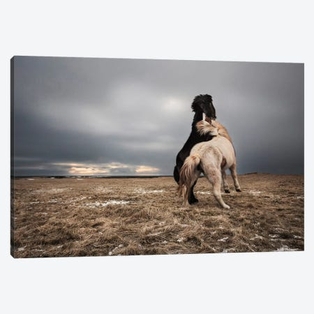 Play Canvas Print #OXM3362} by Bragi Ingibergsson Canvas Art