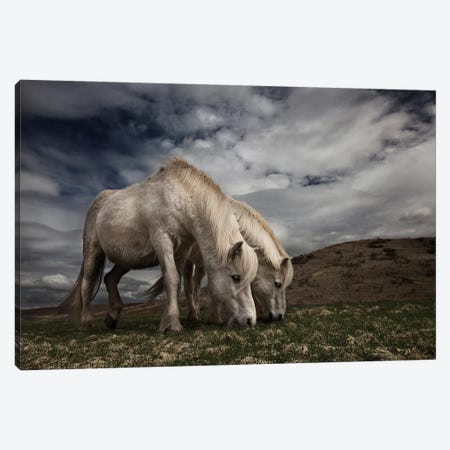 Two Years Later Canvas Print #OXM3366} by Bragi Ingibergsson Canvas Print