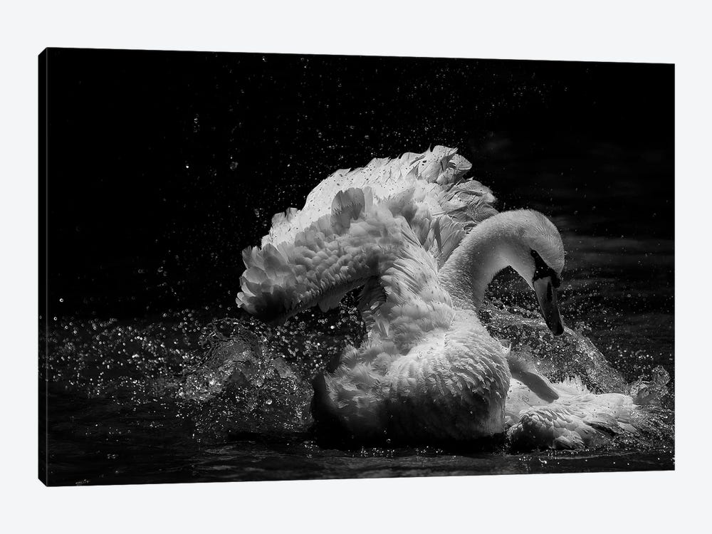 In Motion by C.S.Tjandra 1-piece Canvas Print