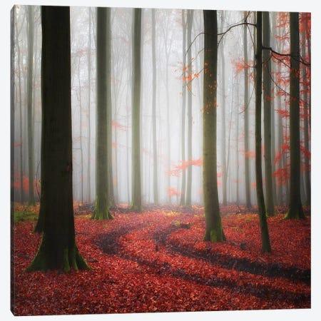 Autumnal Tracks Canvas Print #OXM3382} by Carsten Meyerdierks Canvas Art