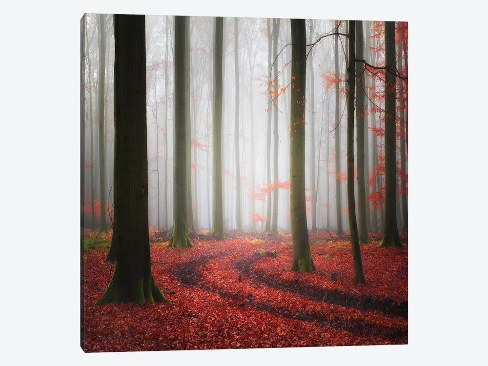 Autumnal Tracks by Carsten Meyerdierks 1-piece Canvas Art Print
