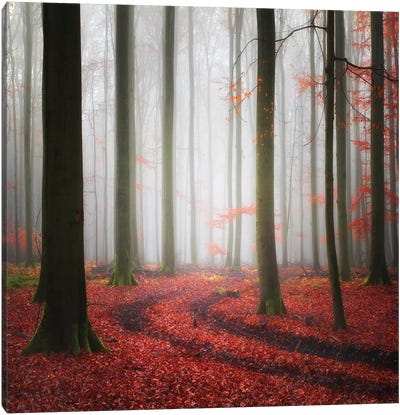 Autumnal Tracks Canvas Art Print