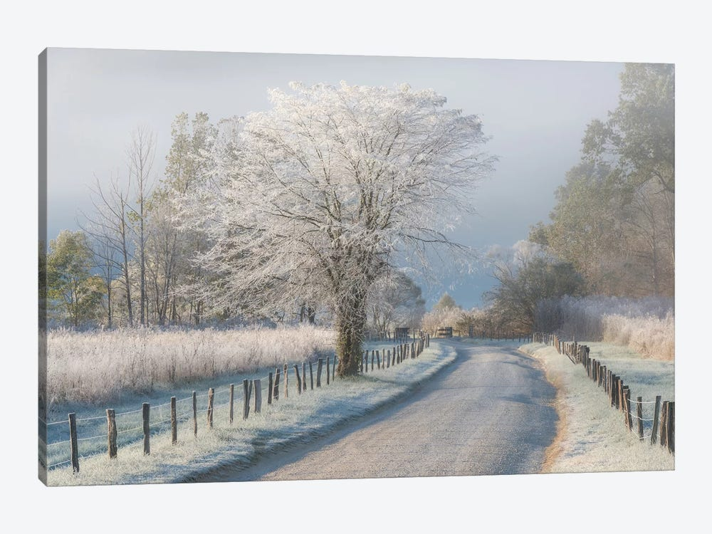 A Frosty Morning by Chris Moore 1-piece Canvas Artwork