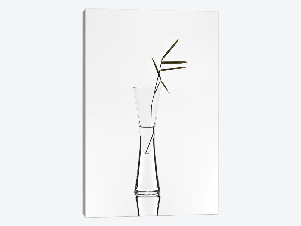 Bamboo by Christian Pabst 1-piece Canvas Wall Art