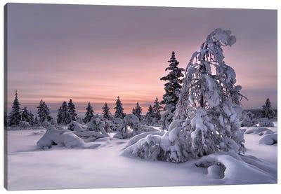 Lapland - Winter Wonderland Canvas Art Print