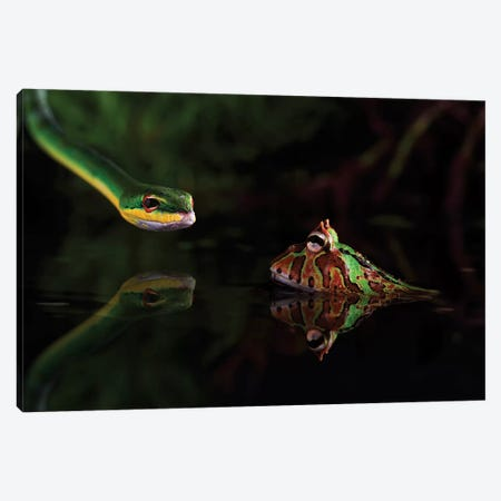 Encounter Canvas Print #OXM3404} by Courage Shikhei Canvas Artwork