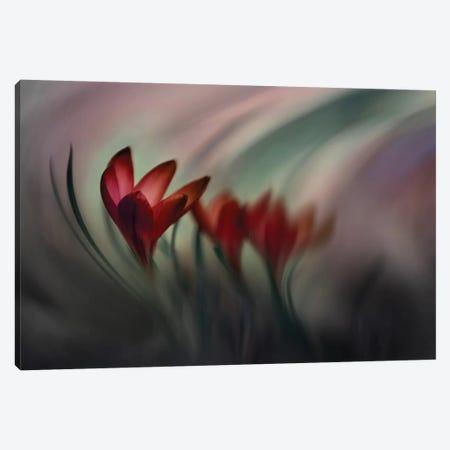 Crocus 3-Piece Canvas #OXM3439} by Doris Reindl Canvas Artwork