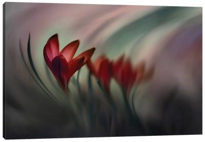 Crocus Canvas Art Print
