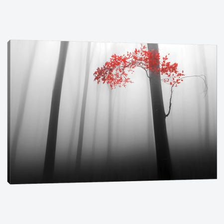 Illusion Canvas Print #OXM3447} by Dragisa Petrovic Canvas Artwork