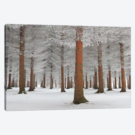 Magical Forest Canvas Print #OXM3448} by Dragisa Petrovic Art Print