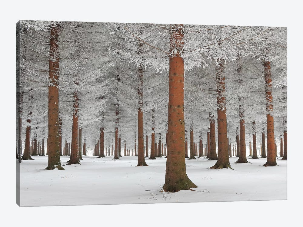 Magical Forest by Dragisa Petrovic 1-piece Canvas Wall Art