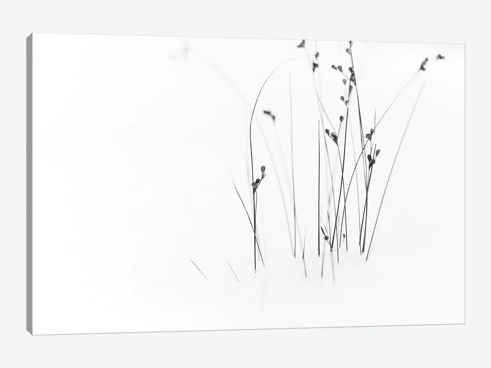 Black On White by Dusan Ljubicic 1-piece Canvas Artwork