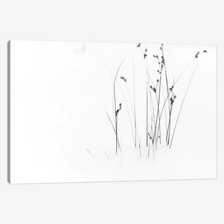 Black On White Canvas Print #OXM3451} by Dusan Ljubicic Canvas Wall Art