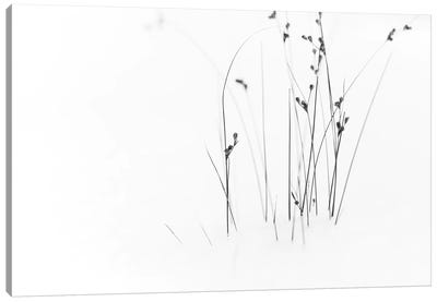 Black On White Canvas Art Print