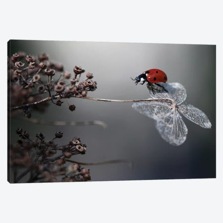 Ladybird On Hydrangea Canvas Print #OXM3458} by Ellen van Deelen Canvas Artwork