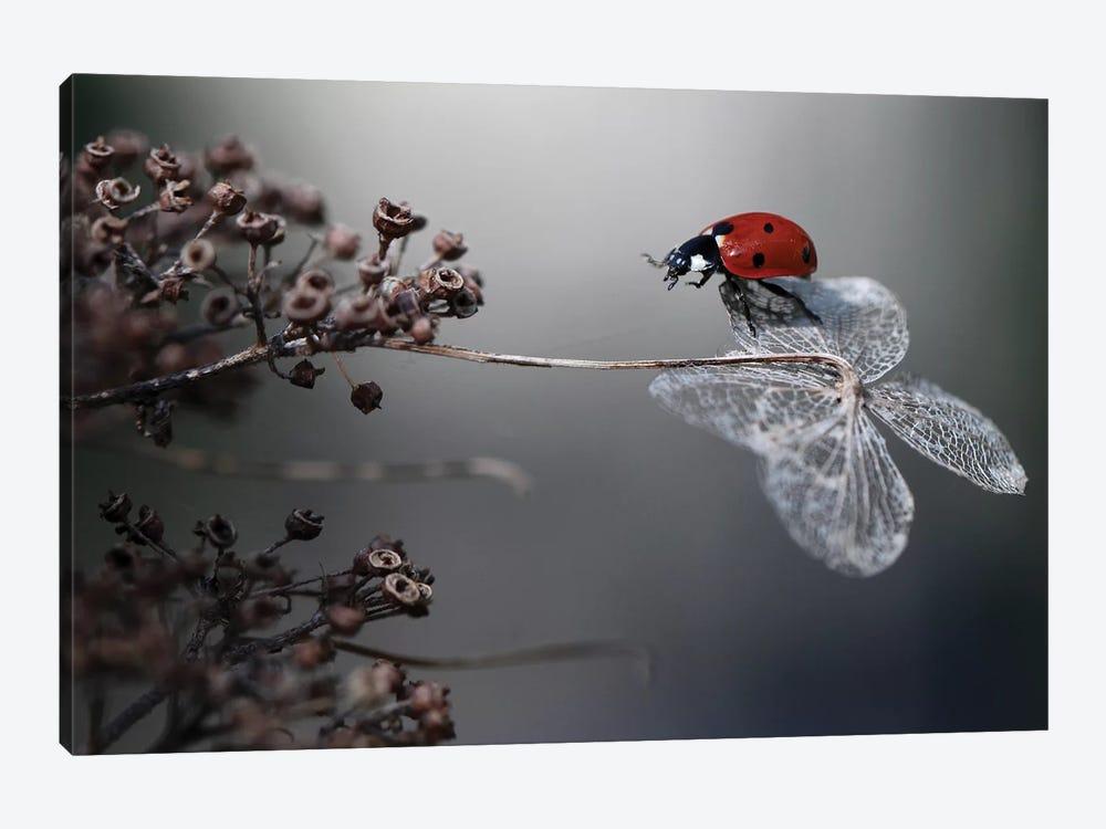 Ladybird On Hydrangea by Ellen van Deelen 1-piece Canvas Print