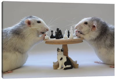 Playing Chess! Canvas Art Print