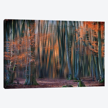 Enchanted Forest Canvas Print #OXM3468} by Em-Photographies Canvas Art Print