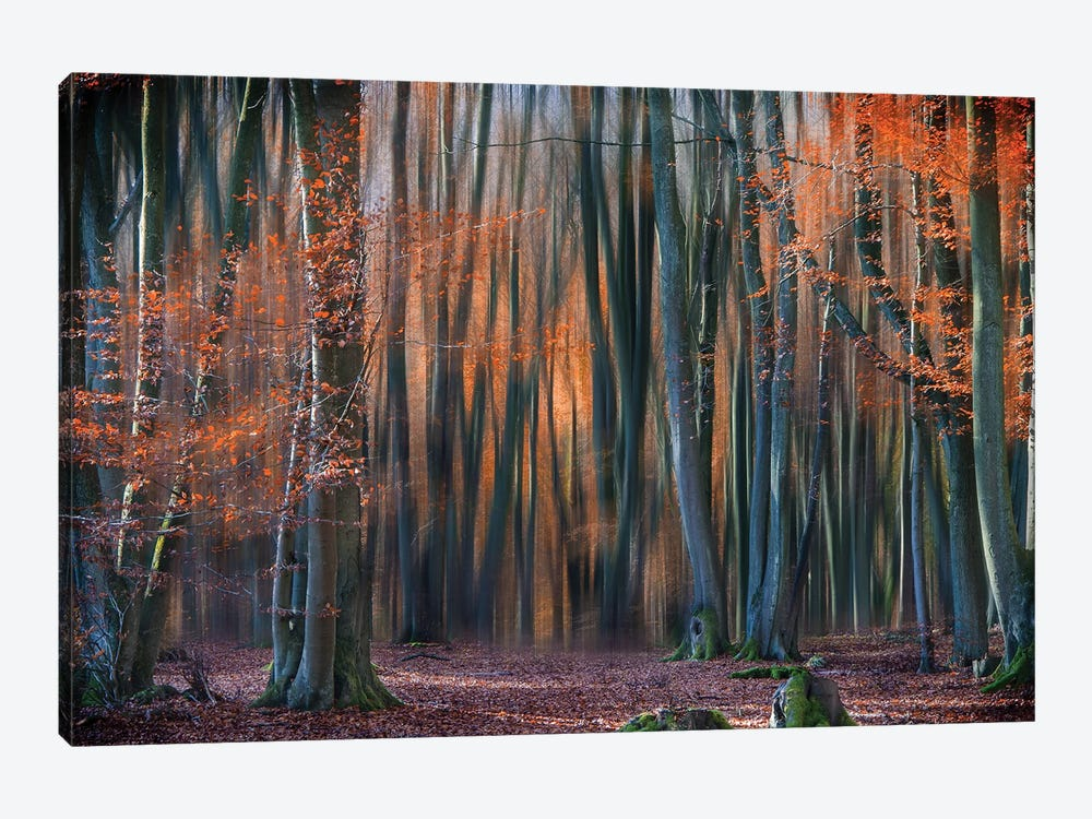 Enchanted Forest by Em-Photographies 1-piece Canvas Wall Art