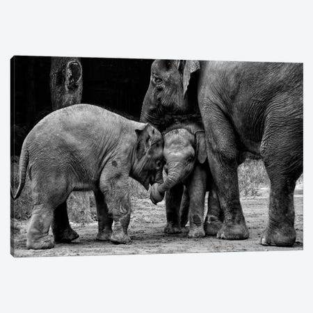 Friends Forever Canvas Print #OXM3476} by Ernest Rex Canvas Art Print