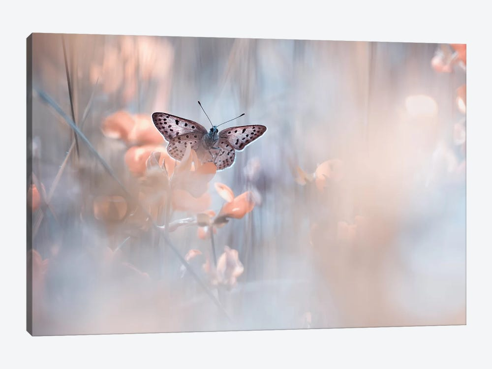 Dakinis Are Watching Over Us by Fabien Bravin 1-piece Canvas Art