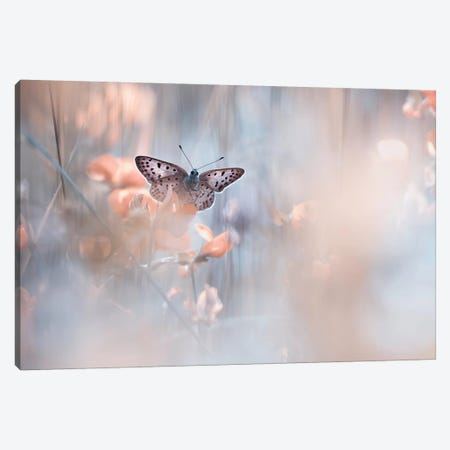 Dakinis Are Watching Over Us Canvas Print #OXM3479} by Fabien Bravin Canvas Art