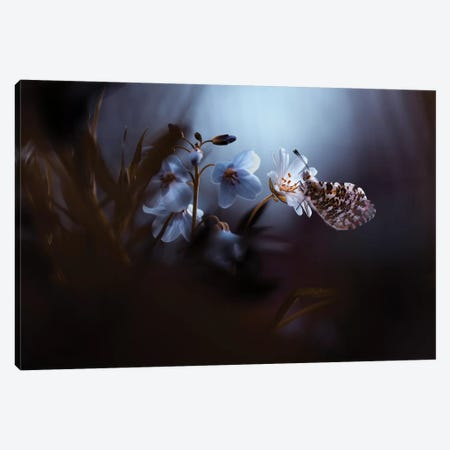 In Your Dreams Everything Is Alright 3-Piece Canvas #OXM3480} by Fabien Bravin Art Print