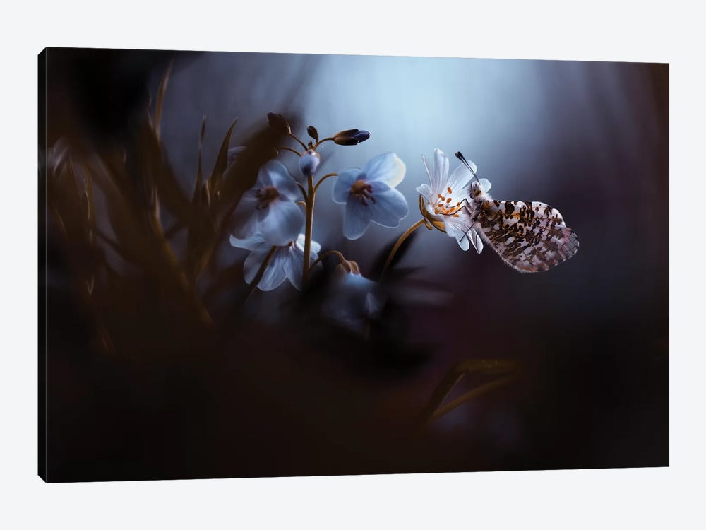 In Your Dreams Everything Is Alright by Fabien Bravin 1-piece Canvas Wall Art