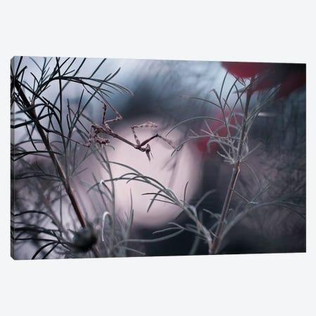 Moonwalker Canvas Print #OXM3482} by Fabien Bravin Canvas Print