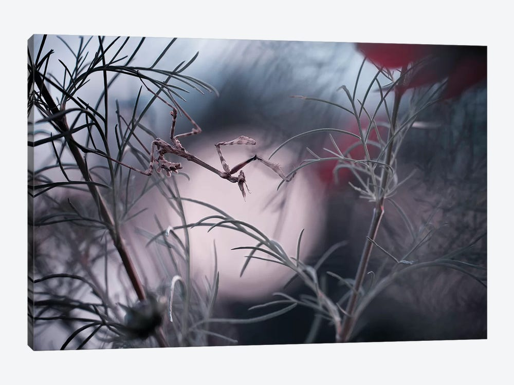 Moonwalker by Fabien Bravin 1-piece Canvas Artwork
