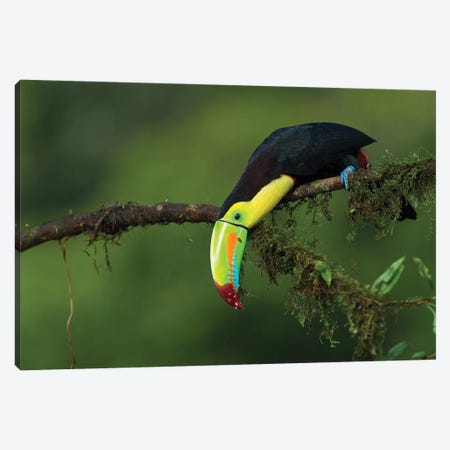 The Colors Of Costa Rica Canvas Print #OXM3485} by Fabio Ferretto Canvas Artwork