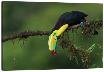 The Colors Of Costa Rica Canvas Art Print