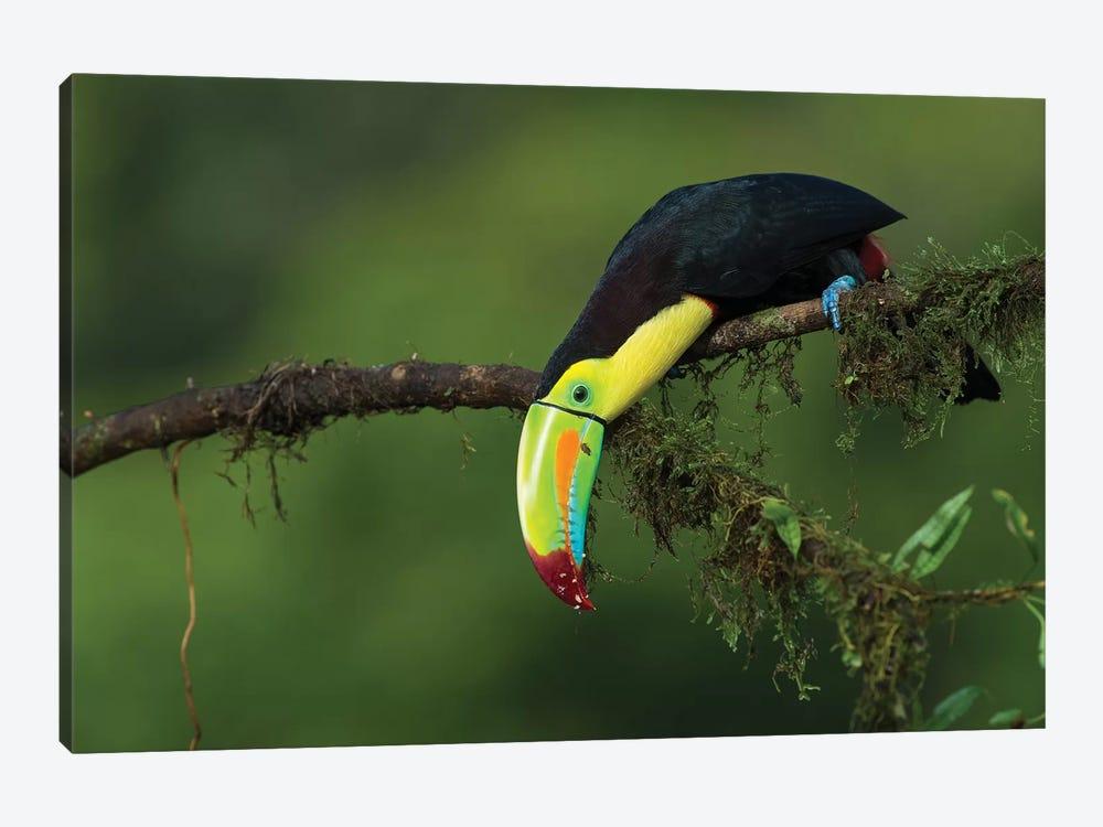 The Colors Of Costa Rica by Fabio Ferretto 1-piece Canvas Art Print