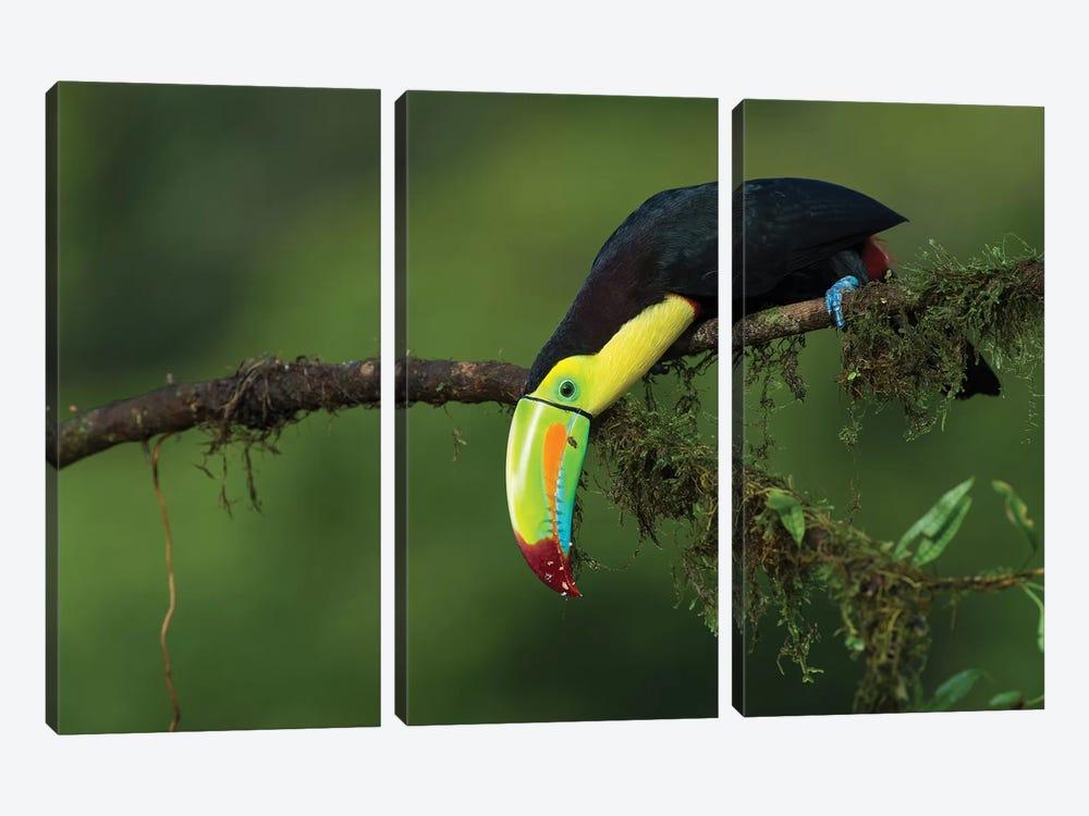 The Colors Of Costa Rica by Fabio Ferretto 3-piece Canvas Art Print
