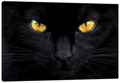 The Hypnotist Of The Night Canvas Art Print