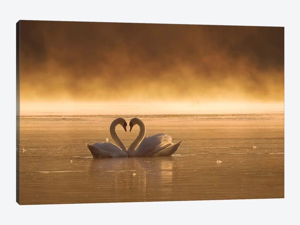 Lovers by Fproject - Przemyslaw 1-piece Canvas Artwork