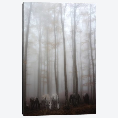 Fog Canvas Print #OXM3494} by Francesco Martini Canvas Print