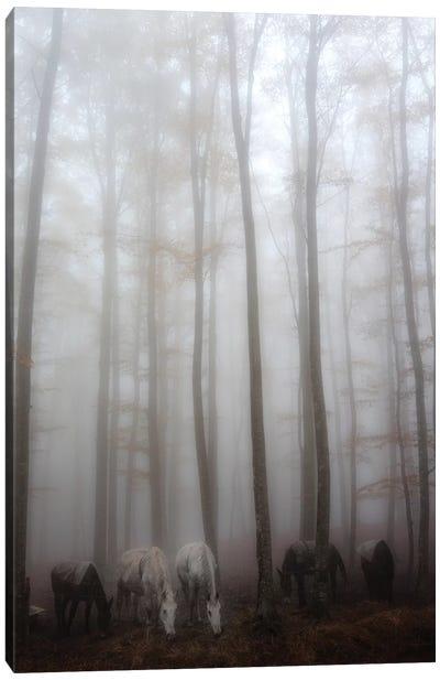Fog Canvas Art Print