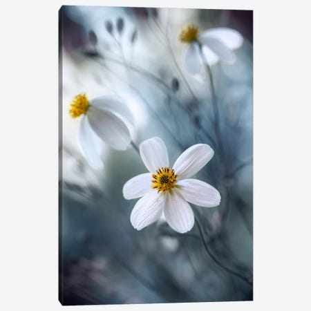Cosmos I Canvas Print #OXM349} by Mandy Disher Art Print