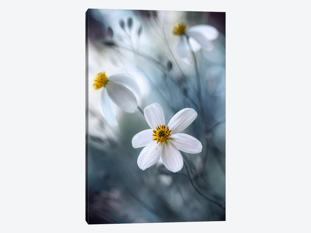 Cosmos I by Mandy Disher 1-piece Canvas Wall Art