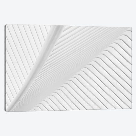 Canopy 3-Piece Canvas #OXM3529} by Greetje van Son Canvas Art