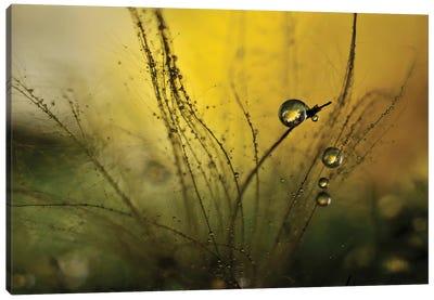 A Golden Morning Shower Canvas Art Print