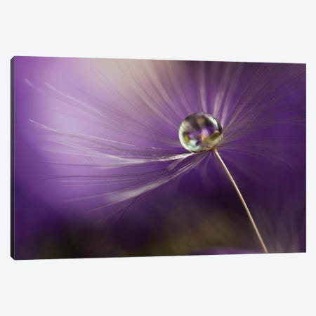 In Shades Of Purple Canvas Print #OXM3544} by Heidi Westum Canvas Art Print